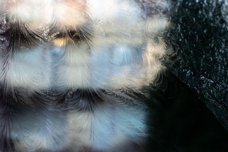 Full frame shot of a bird