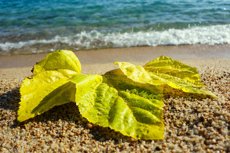 Close-up of leaves on beach