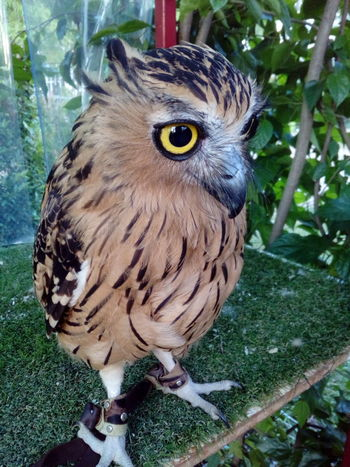 Animal Themes One Animal Bird Bird Of Prey Owl Day No People Outdoors Nature Close-up Perching Animals Animals In The Wild Animal Wildlife