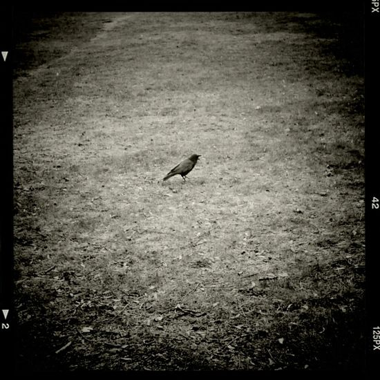 Andrography Phoneography Vignette For Android Shuttermag Love/Hate Relationship Yak YAk YAk