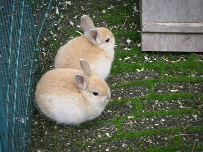 Two Is Better Than One Because two is cuter than one! Cute Rabbit - Animal Rabbits Baby Rabbits Pets Animal Themes Animal Photography Cute Pets Domestic Animals No People