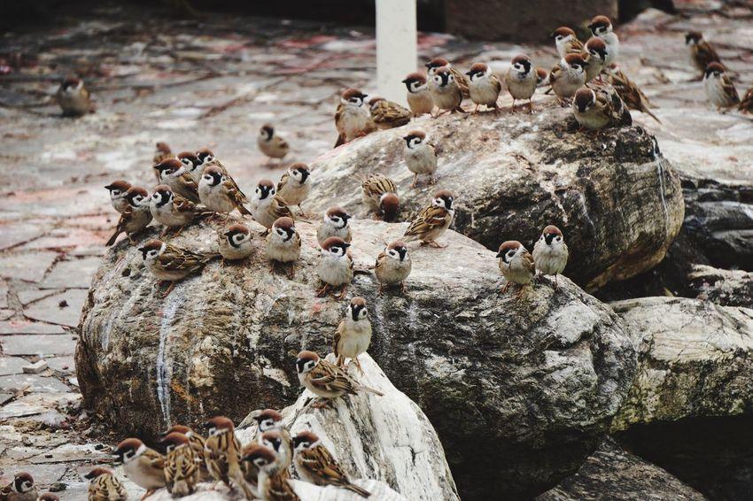 Bird Photography Birds EyeEmNewHere