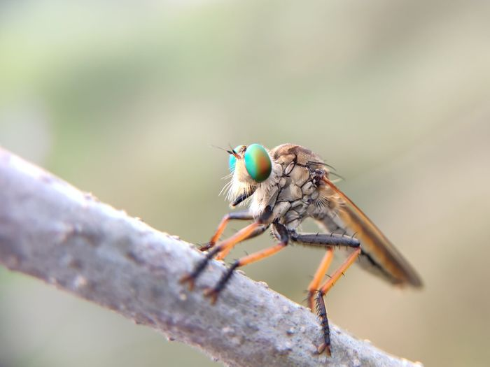 Close-up of insect on stick