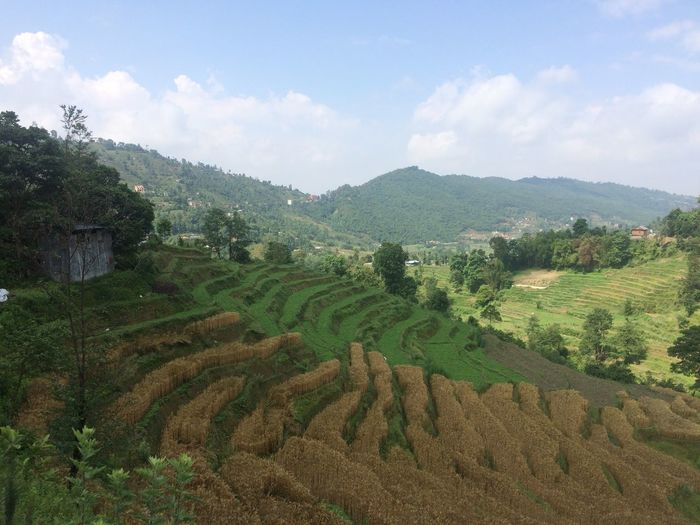 Helloworld Beautiful Nepal EyeEm Nature Lover Growth Plant Landscape Sky Cloud - Sky Tree Field Agriculture Environment Nature Tranquil Scene Beauty In Nature Tranquility Land Rural Scene Scenics - Nature Green Color Farm Crop  Day
