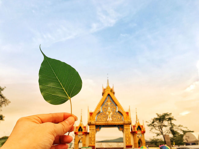 Buddha Morning Sky Thailand Architecture Beleave Bodhi Leaf Close-up Day Focus On Foreground Holding Human Body Part Human Finger Human Hand Leaf Nature One Person Outdoors People Real People Religion Sky Temple Tree Unrecognizable Person