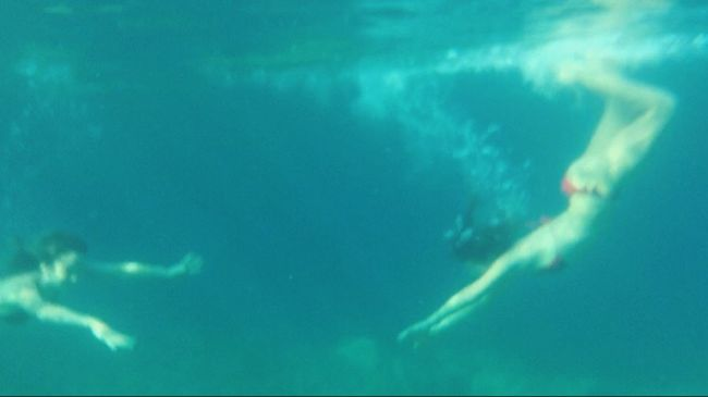 Swimming In The Ocean Summer 🐠🐟🐬