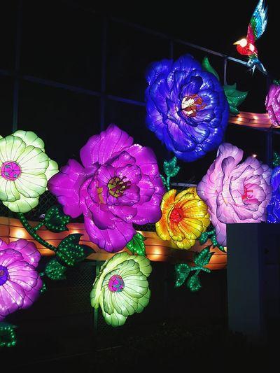 Lights Flowers Outdoors First Eyeem Photo