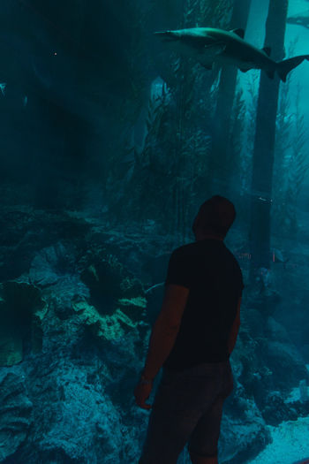 Rear view of man standing by fishes swimming in aquarium