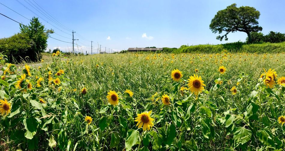 Plant Growth Sky Beauty In Nature Field Land Nature