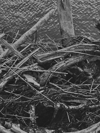 Textured  Black And White Outdoors Nature Close-up Shapes And Forms Weathered View Natural Collages Water Black & White Abstract Natural Condition Driftwood Abstractions Shapes In Nature  Layers And Textures Abstract Nature Perspective Patterns In Nature Wood - Material Waterfront Over Water