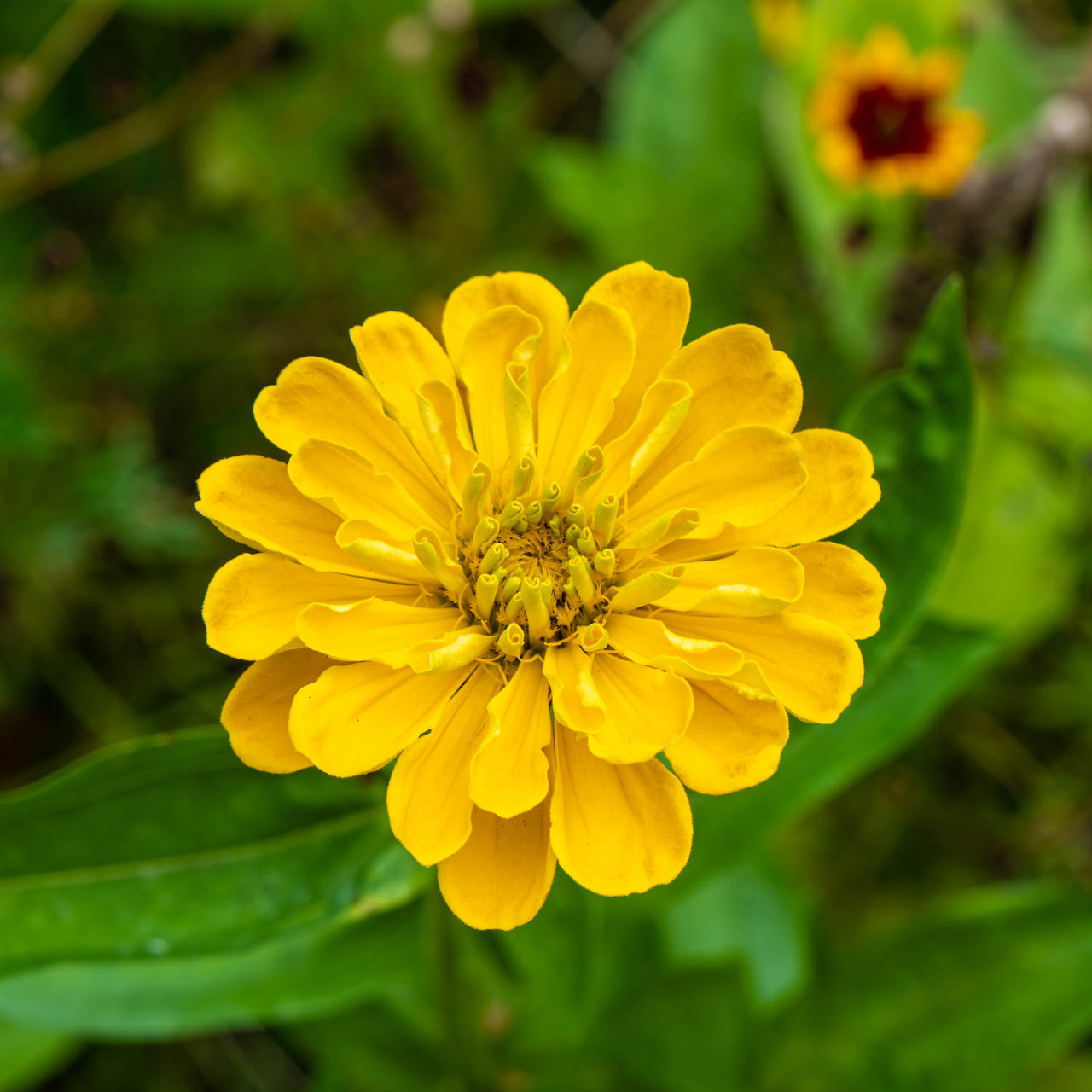 CLOSE-UP OF YELLOW FLOWER ON PLANT OUTDOORS