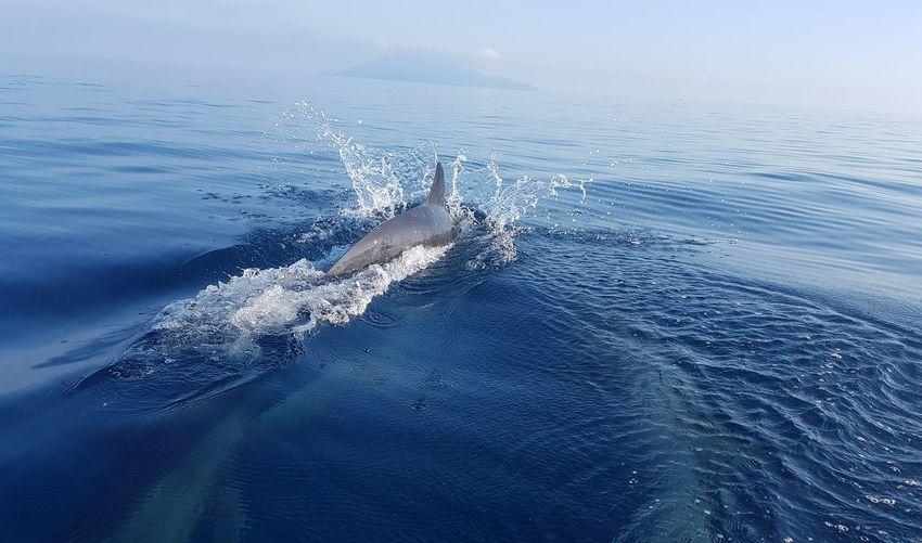 Dolphins Marine Life UnderSea Sea Water Blue Swimming Close-up Sea Life Dolphin Aquatic Mammal