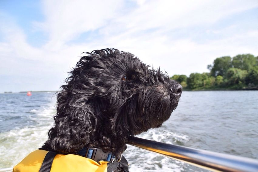 Hanging Out Hello World Enjoying Life Dog Love Doglife Enjoying The Sun Cute Relaxing Boats Dog