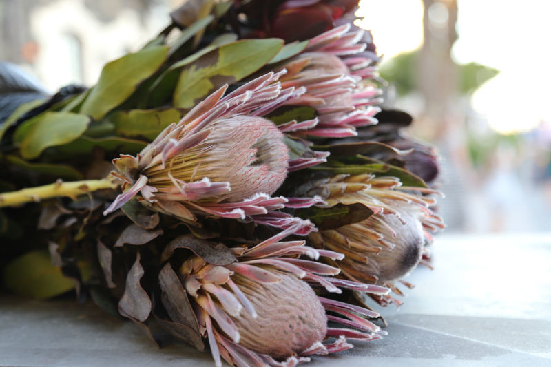 Close-up Day Flower Flower Collection Flower Head Flowers Focus On Foreground Fragility Freshness Leaf Market Nature No People Outdoors Protea Blossom Protea Flower Proteas Retail