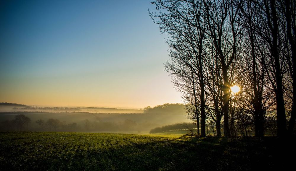 Foggy EyeEm Best Shots Nature Beauty In Nature Tree Scenics Nature_collection Tranquility Sunlight Landscape Rural Scene Field Sunset No People Growth Outdoors Sky Clear Sky Idyllic Day Forest Beauty In Nature Countryside Hazy  Tree The Great Outdoors