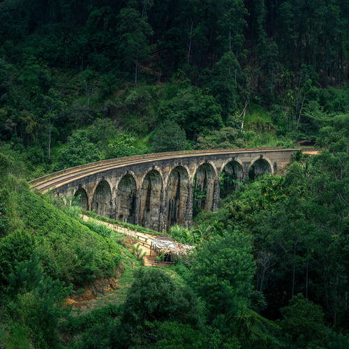 Arch bridge amidst trees in forest