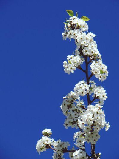 Spring Into Spring Blossom Blossoms