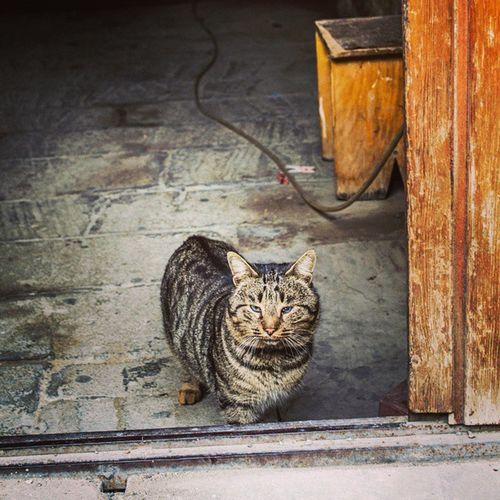 By Kamal Kengerli @icherisheher Icherisheher Instaolkem Myazerbaijanaz Cats Nikon Nikonazerbaijan