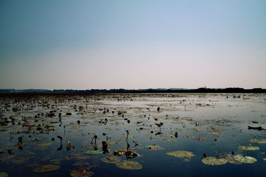 Federsee - calm Federsee Nature Photography Beauty In Nature Blue Water Clear Sky Low Tide Lake Standing Water Water Lily Calm Water Plant