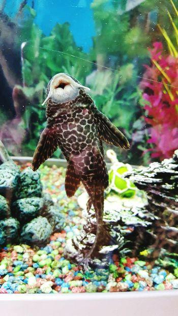 Fish Fish Tank Sanitary Water Dots Swimming With The Fish EyeEmNewHere