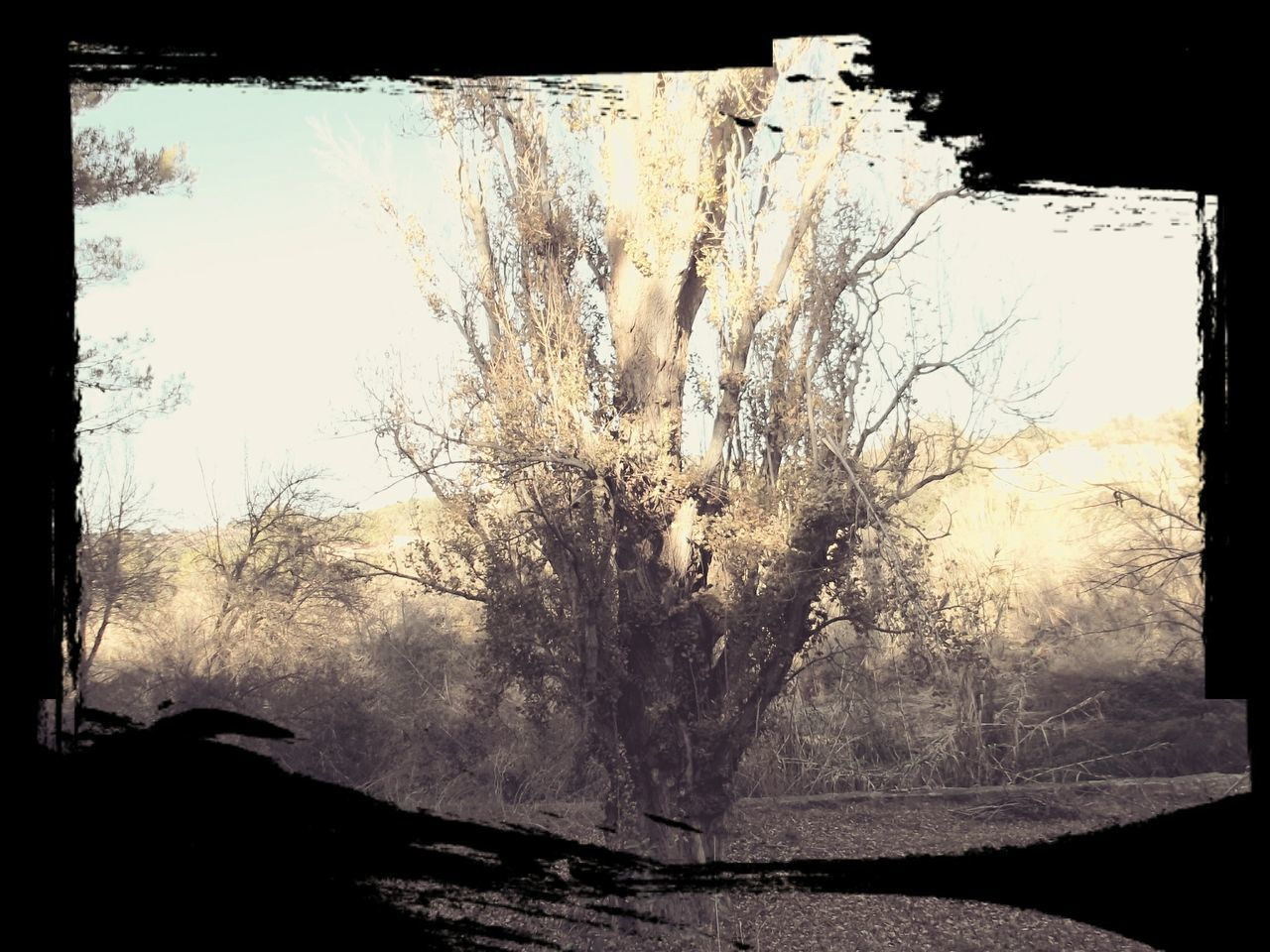 tree, nature, landscape, silhouette, bare tree, beauty in nature, day, outdoors, branch, sky, no people
