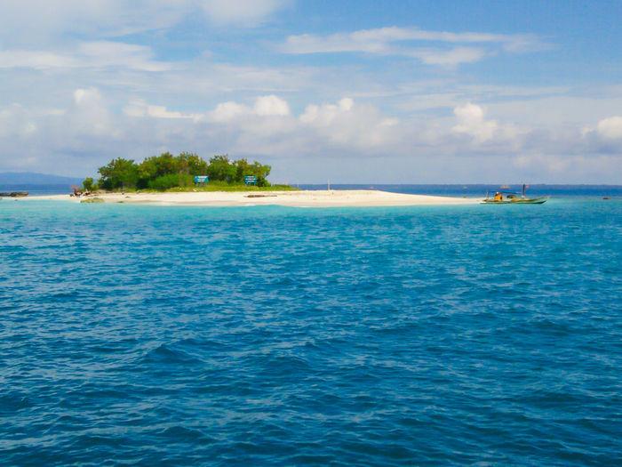 Blue Ocean Palm