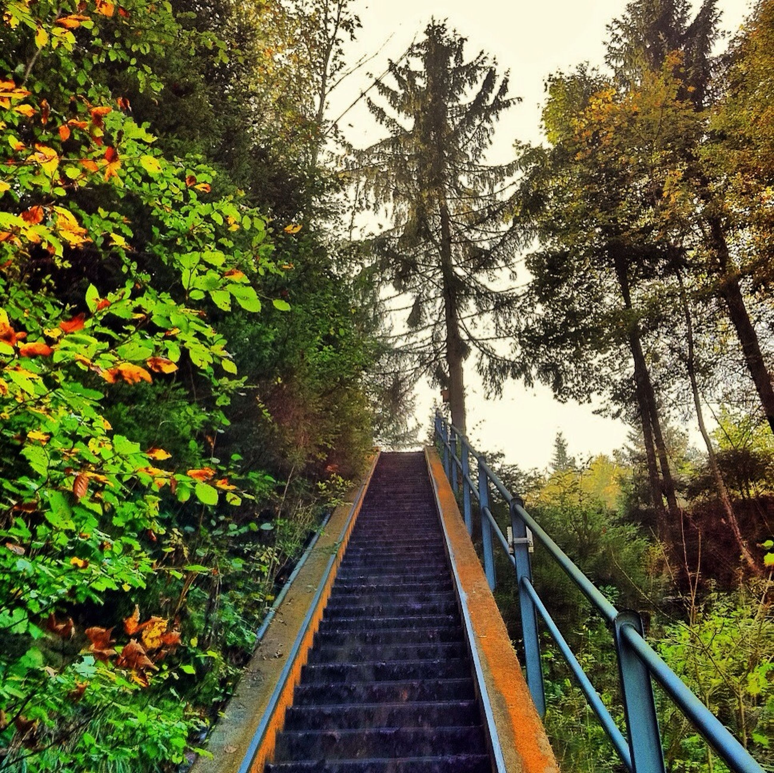 tree, the way forward, railing, growth, built structure, diminishing perspective, footbridge, steps, architecture, vanishing point, nature, plant, day, connection, railroad track, steps and staircases, tranquility, forest, outdoors, no people