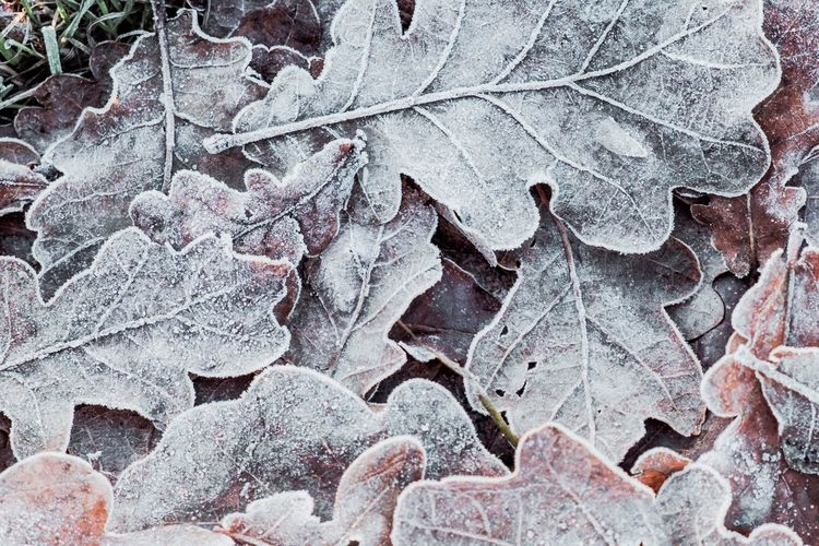 Leaf Close-up Backgrounds Nature Full Frame No People Fragility Outdoors Autumn Day Leaves Beauty In Nature Showcase: December Fuji-xe2s Tenebrio.photos Wintertime Frosty Mornings