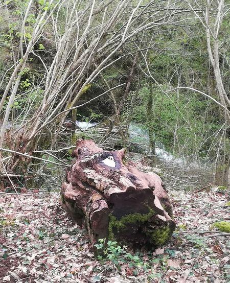 El tronco Tree