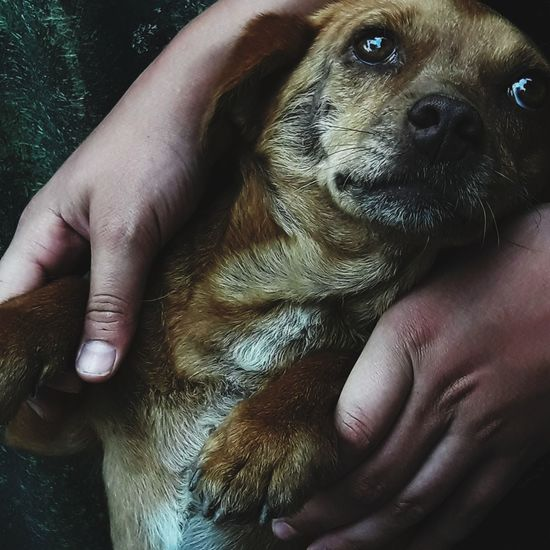 Human Body Part Pets Dog Human Hand One Person One Animal Animal People Domestic Animals Adult Mammal Close-up Animal Themes Young Animal Indoors  Adults Only One Man Only Only Men Day Dog Photography Dogmodel Cutedog Saddog Outdoors Outdoor Photography