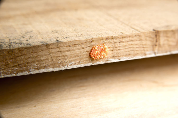High angle view of insect on wooden plank