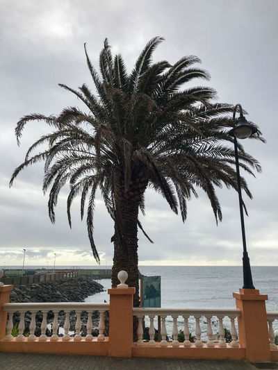 Palm tree by swimming pool against sky