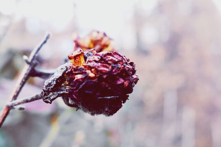 Winter Nature Raspberry :/