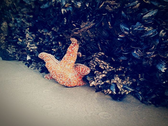 Hold tight Starfish  Beach Ocean Mussels Sea Life Hold Tight Friendly Fish Low Tide Eyeemphoto
