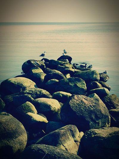Spaziergang Tiere Meer alles perfekt Sunshine Sandcastles Relaxing Enjoying The Sun Sea