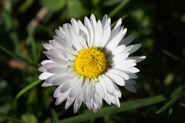 daisy in a