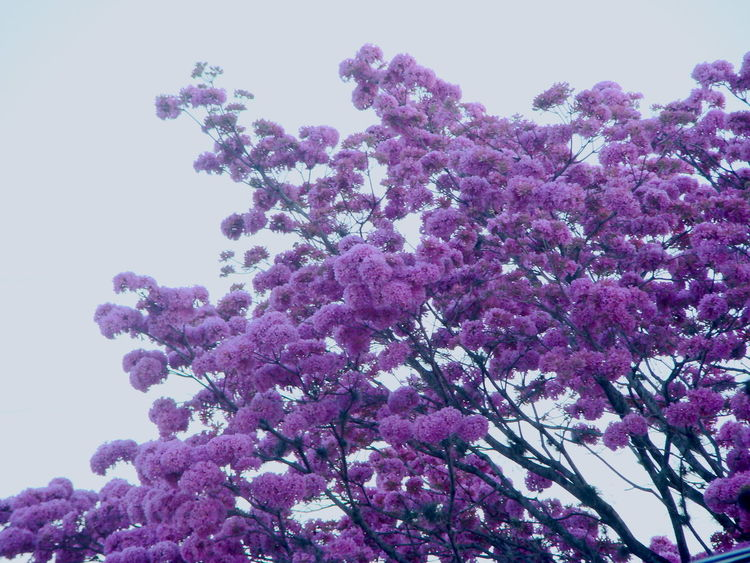 Aesthetically Pleasing Beauty In Nature Blossom Flower Nature Peace Pink Pink Flower Spring Spring Flowers Tree TreePorn Wind My Favorite Photo The Great Outdoors - 2017 EyeEm Awards
