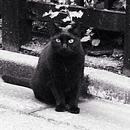 Cat Black & White Morning Cruising Good Morning my load ジジ