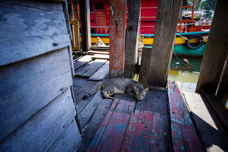 High angle view of tabby cat lying on boardwalk