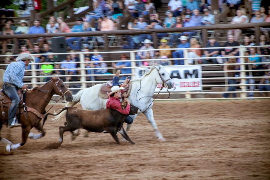America Cowboy Horse Horse Riding Horses Q Quadruped Quick Rodeo Showcase March USA