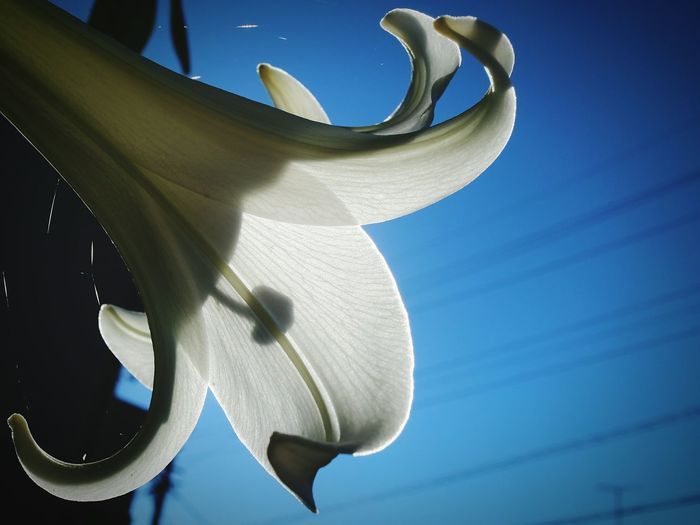 Low angle view of flower against clear sky
