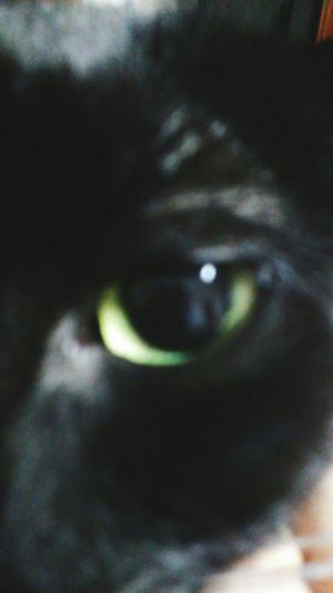 One Animal Eyesight No People Outdoors Animal Themes Eyeball Olho Cats Of EyeEm Cat Cat Eyes