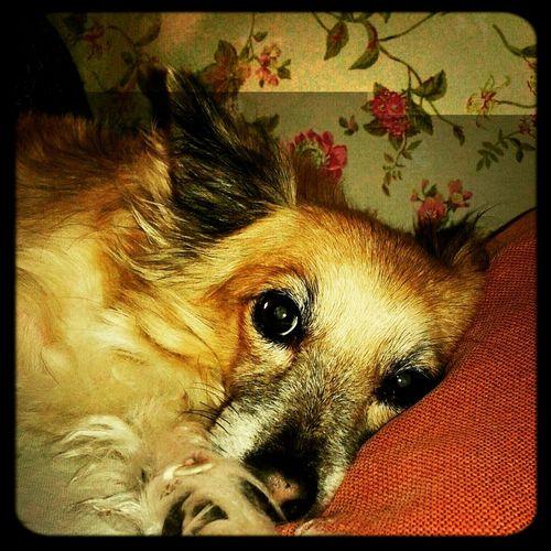 Love ♥ I Love My Dog Goodmorning