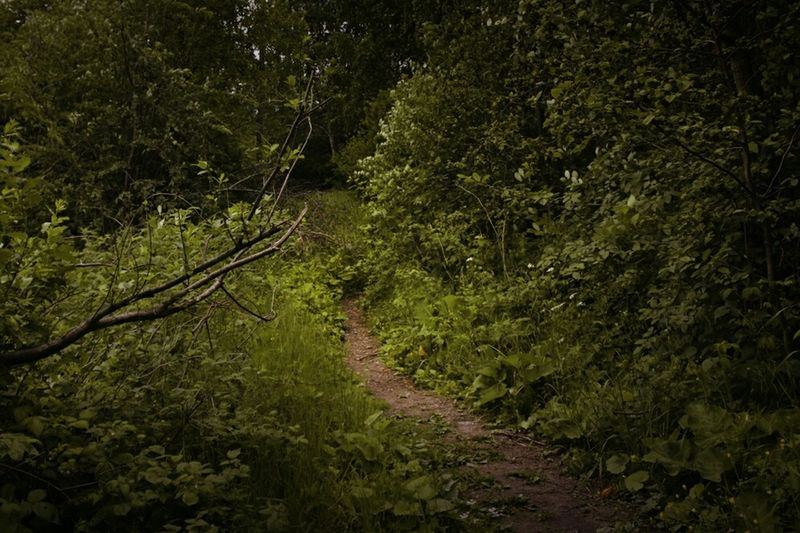 Path Elvenpath In The Forest Forest Nature_collection Nature DEEP FOREST