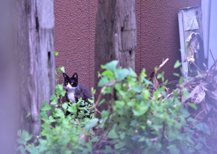 Japan Yokohama 横浜 Snapshots Snapshot Cat BLackCat Nikon D750 鶴見線沿線で見かけた黒猫ちゃん!