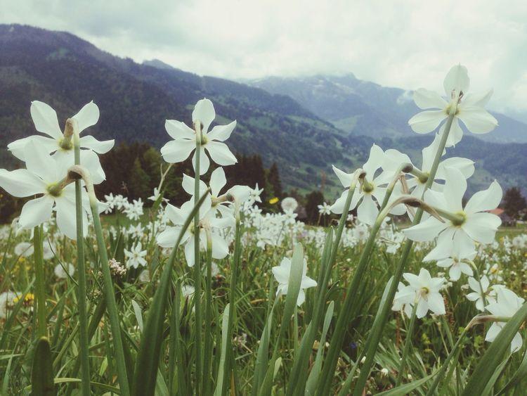 Flower Porn Ailine Filter EyeEmSwiss Les Pléjades, Vevey, Switzerland