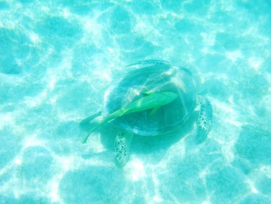 Tourtle Beach Photography Akumal Snorkeling Enjoying Life Mexico Riviera Maya
