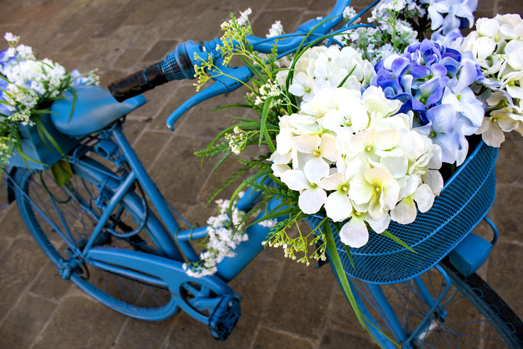 Italy's Colors. FILIPPI GIULIA PHOTOGRAPHY. Bicycle Bike Blue Botany Bouquet Bunch Of Flowers Canon Colors Flower Flower Head Freshness Green Italian Italy Light And Shadow Nature No People Outdoors Petal Photographer Photography Purple Venice Vintage White