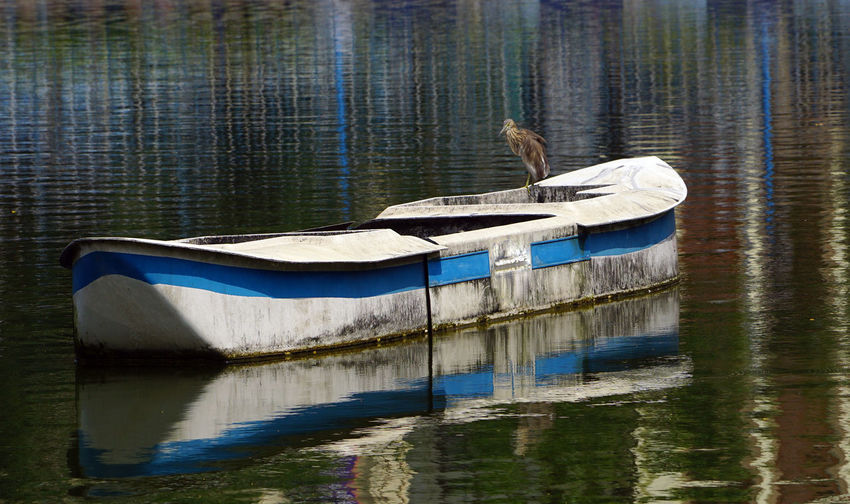 A Pond heron seating on the boat A Pond Heron On The Boat Water Reflection Waterfront Lake Bird Animal Animal Themes Nautical Vessel Vertebrate Animal Wildlife Animals In The Wild One Animal Nature Day No People Transportation Beauty In Nature Mode Of Transportation Outdoors
