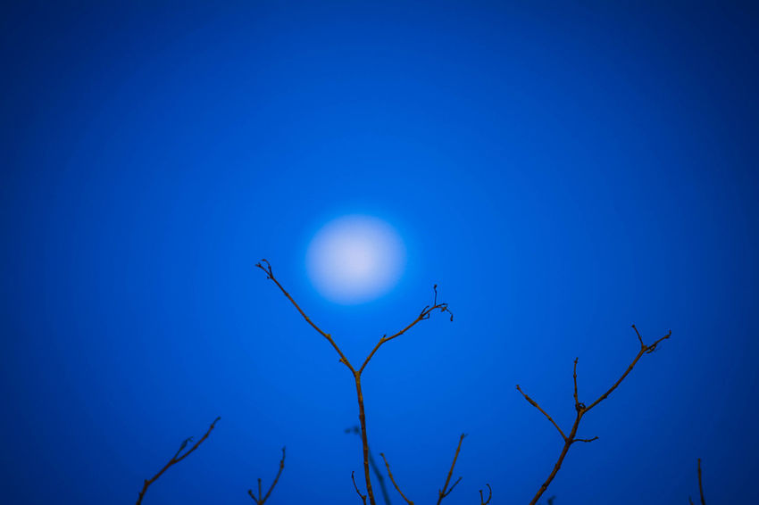 Astronomy Bare Tree Beauty In Nature Blue Branch Clear Sky Copy Space Full Moon Low Angle View Moon Moonlight Nature Night No People Outdoors Planetary Moon Plant Scenics - Nature Sky Space Tranquility Tree